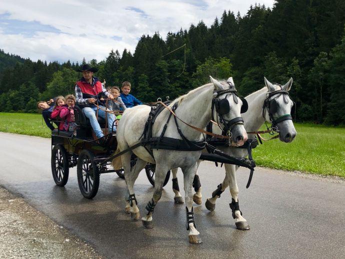 Vožnja s kočijo z lipicanci